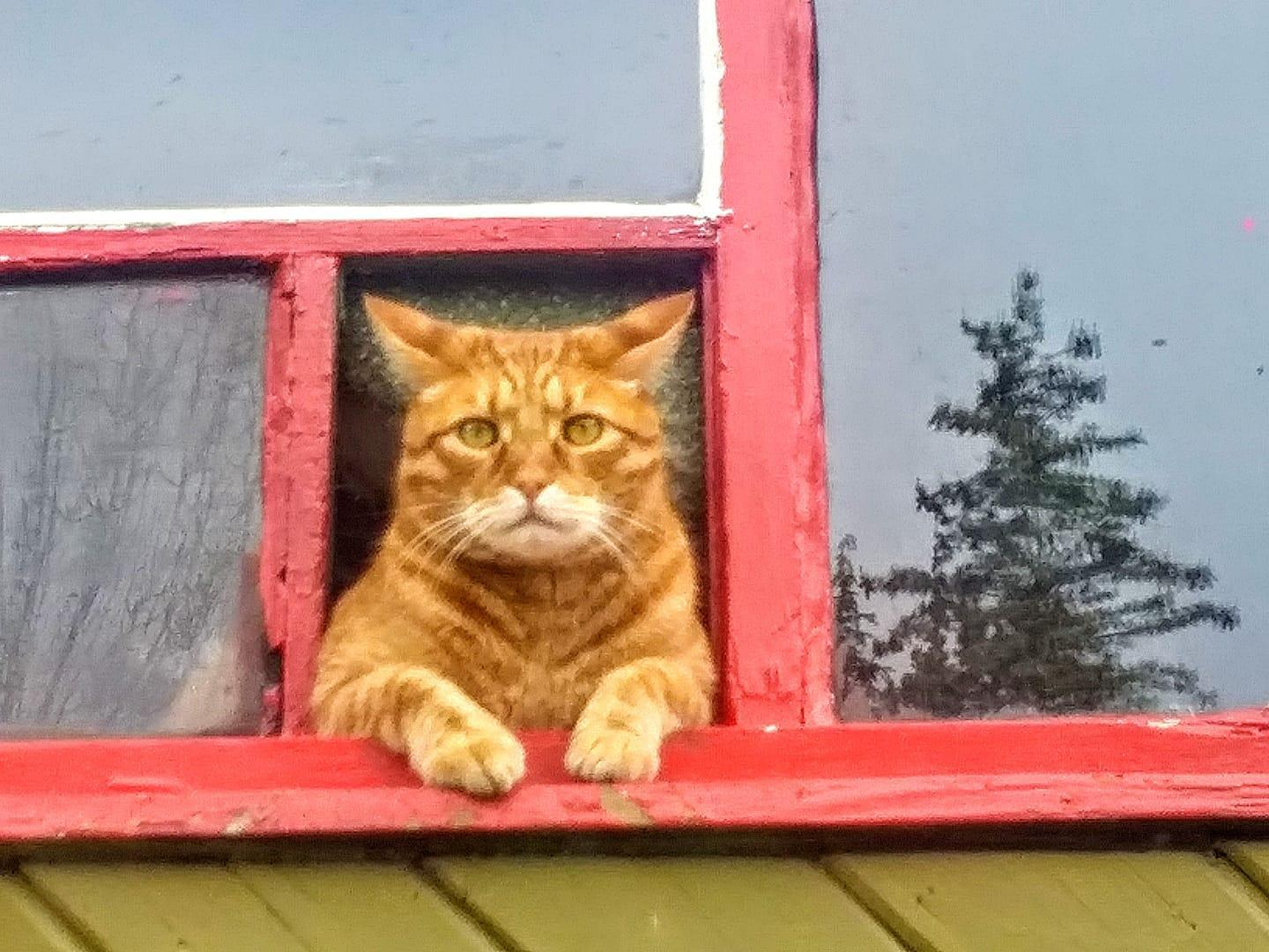 red cat welcome window